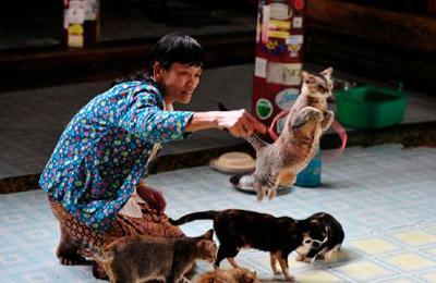 猫跳寺可爱猫咪